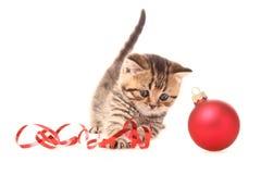 γατάκι Χριστουγέννων στοκ φωτογραφία με δικαίωμα ελεύθερης χρήσης
