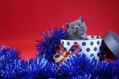 Γατάκι ως δώρο Χριστουγέννων σε ένα παρόν κιβώτιο, κόκκινο υπόβαθρο στοκ εικόνα