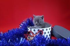 Γατάκι ως δώρο Χριστουγέννων σε ένα παρόν κιβώτιο, κόκκινο υπόβαθρο στοκ εικόνες
