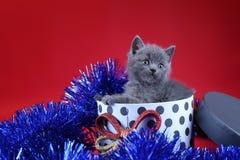 Γατάκι ως δώρο Χριστουγέννων σε ένα παρόν κιβώτιο, κόκκινο υπόβαθρο στοκ φωτογραφία με δικαίωμα ελεύθερης χρήσης
