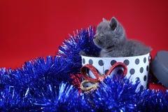 Γατάκι ως δώρο Χριστουγέννων σε ένα παρόν κιβώτιο, κόκκινο υπόβαθρο στοκ εικόνες με δικαίωμα ελεύθερης χρήσης