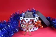 Γατάκι ως δώρο Χριστουγέννων σε ένα παρόν κιβώτιο, κόκκινο υπόβαθρο στοκ φωτογραφίες με δικαίωμα ελεύθερης χρήσης