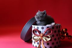 Γατάκι ως δώρο Χριστουγέννων σε ένα παρόν κιβώτιο, κόκκινο υπόβαθρο στοκ εικόνα με δικαίωμα ελεύθερης χρήσης