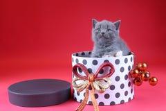 Γατάκι ως δώρο Χριστουγέννων σε ένα παρόν κιβώτιο, κόκκινο υπόβαθρο στοκ φωτογραφία