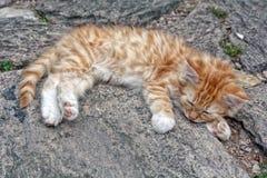 Γατάκι ύπνου Στοκ φωτογραφίες με δικαίωμα ελεύθερης χρήσης