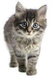 γατάκι Στοκ Εικόνα