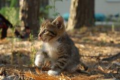 γατάκι Στοκ φωτογραφία με δικαίωμα ελεύθερης χρήσης