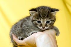 γατάκι Στοκ Εικόνες
