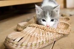γατάκι Στοκ εικόνα με δικαίωμα ελεύθερης χρήσης