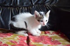 γατάκι 5 Στοκ φωτογραφίες με δικαίωμα ελεύθερης χρήσης
