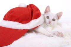 γατάκι cristmas ΚΑΠ Στοκ φωτογραφία με δικαίωμα ελεύθερης χρήσης