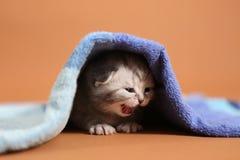 Γατακιών μωρών κάτω από μια μπλε πετσέτα Στοκ Εικόνες