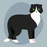 Γατών φυλής ο βρετανικός shorthair χαριτωμένος κατοικίδιων ζώων πορτρέτου χνουδωτός λατρευτός αιλουροειδής λευκός Μαύρος παιχνιδι ελεύθερη απεικόνιση δικαιώματος
