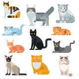 Γατών φυλών καθορισμένη διανυσματική απεικόνιση ζώων κατοικίδιων ζώων αφισών χαριτωμένη Στοκ Εικόνες