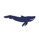 Γαλάζια φάλαινα σε ένα άσπρο υπόβαθρο Στοκ φωτογραφίες με δικαίωμα ελεύθερης χρήσης