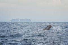 γαλάζια φάλαινα στοκ εικόνες με δικαίωμα ελεύθερης χρήσης