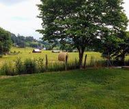 Γαλήνια πράσινη ρύθμιση, πράσινο λιβάδι, σιταποθήκες, δέντρα δεμάτων σανού μια όμορφη σαφή ημέρα Στοκ Εικόνα