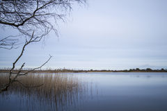 Γαλήνια φυσική άποψη της λίμνης και των καλάμων Στοκ εικόνα με δικαίωμα ελεύθερης χρήσης