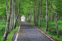 Γαλήνιος δρόμος Στοκ Εικόνες