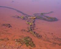 Γαλαζοπράσινα άλγη και νερό Στοκ Φωτογραφίες