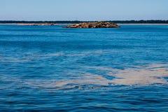 Γαλαζοπράσινα άλγη Στοκ εικόνα με δικαίωμα ελεύθερης χρήσης