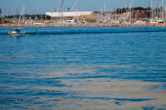 Γαλαζοπράσινα άλγη Στοκ φωτογραφία με δικαίωμα ελεύθερης χρήσης