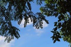 γαλαζοπράσινος ουρανό&sigma Στοκ φωτογραφίες με δικαίωμα ελεύθερης χρήσης
