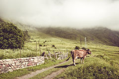 Γαλακτοκομική αγελάδα στη θερινή πράσινη χλόη 7 ζωικές σειρές αγροτικής απεικόνισης κινούμενων σχεδίων τοπίο αγροτικό Έννοια καλλ Στοκ φωτογραφία με δικαίωμα ελεύθερης χρήσης