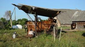 Γαλακτοκομική γυναίκα αγελάδων κοριτσιών γάλακτος φιλμ μικρού μήκους