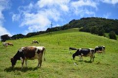 Γαλακτοκομικό αγρόκτημα στη Κόστα Ρίκα Στοκ Εικόνα