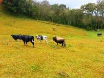 Γαλακτοκομικό αγρόκτημα, Στοκ φωτογραφίες με δικαίωμα ελεύθερης χρήσης