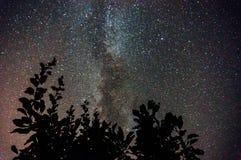 Γαλακτώδης τρόπος με τους κλάδους δέντρων Στοκ Εικόνες