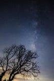 Γαλακτώδης τρόπος πέρα από το δέντρο Στοκ Φωτογραφία