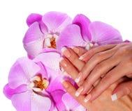 Γαλλικό μανικιούρ. Όμορφα θηλυκά χέρια με τα ρόδινα λουλούδια ορχιδεών Στοκ Φωτογραφία
