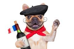 Γαλλικό σκυλί κρασιού στοκ εικόνα με δικαίωμα ελεύθερης χρήσης