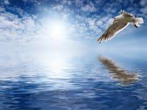 γδέρνοντας seagull στοκ φωτογραφία με δικαίωμα ελεύθερης χρήσης