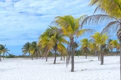 Γείηνος παράδεισος, ήλιος φοινίκων και άμμος κοντά στη θάλασσα Στοκ εικόνες με δικαίωμα ελεύθερης χρήσης