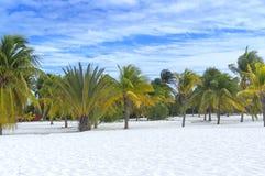 Γείηνος παράδεισος, ήλιος φοινίκων και άμμος κοντά στη θάλασσα Στοκ Φωτογραφία