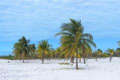 Γείηνος παράδεισος, ήλιος φοινίκων και άμμος κοντά στη θάλασσα Στοκ Εικόνα