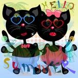 Γειά σου αφίσα θερινών γατών Στοκ φωτογραφία με δικαίωμα ελεύθερης χρήσης