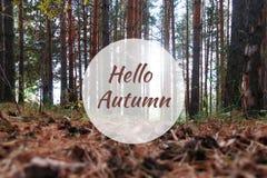 Γειά σου ευχετήρια κάρτα φθινοπώρου με τα δέντρα πεύκων στο υπόβαθρο Στοκ φωτογραφία με δικαίωμα ελεύθερης χρήσης