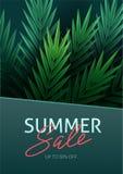 Γειά σου καλοκαίρι, καλοκαίρι Η αφίσα κειμένων στα πλαίσια των τροπικών εγκαταστάσεων Φύλλα φοινικών, φύλλο ζουγκλών και διανυσματική απεικόνιση
