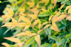 γειά σου Οκτώβριος φθινοπωρινή μελαγχολία φύλλων ημέρας κίτρινη Υπόβαθρο πτώσης και φθινοπώρου στοκ εικόνες με δικαίωμα ελεύθερης χρήσης
