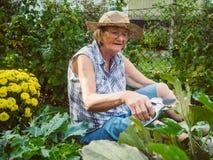 Γελώντας ανώτερη γυναίκα που καλλιεργεί μεταξύ των κρεβατιών λουλουδιών Στοκ Εικόνες