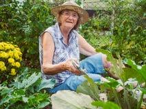Γελώντας ανώτερη γυναίκα που καλλιεργεί μεταξύ των κρεβατιών λουλουδιών Στοκ εικόνες με δικαίωμα ελεύθερης χρήσης