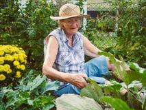 Γελώντας ανώτερη γυναίκα που καλλιεργεί μεταξύ των κρεβατιών λουλουδιών Στοκ εικόνα με δικαίωμα ελεύθερης χρήσης