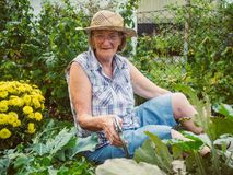 Γελώντας ανώτερη γυναίκα που καλλιεργεί μεταξύ των κρεβατιών λουλουδιών Στοκ Φωτογραφίες