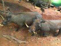 Γεμισμένα ζώα στο Τέξας στοκ φωτογραφία