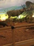 Γεμισμένα ζώα στο Τέξας στοκ εικόνα