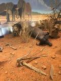 Γεμισμένα ζώα στο Τέξας Στοκ Εικόνες